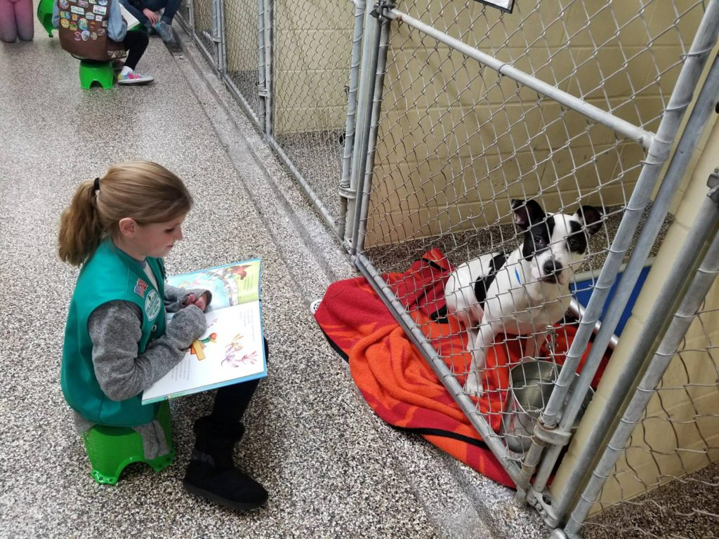 Scouting volunteers read books to dogs to help them socialize.